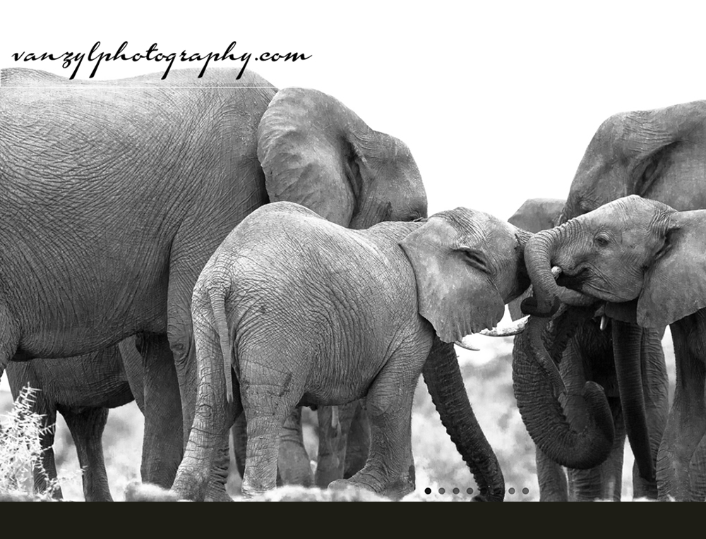 Van Zyl Photography, Professional Wildlife Photographic Safari Tours by Johan Van Zyl. Website created by Design so Fine